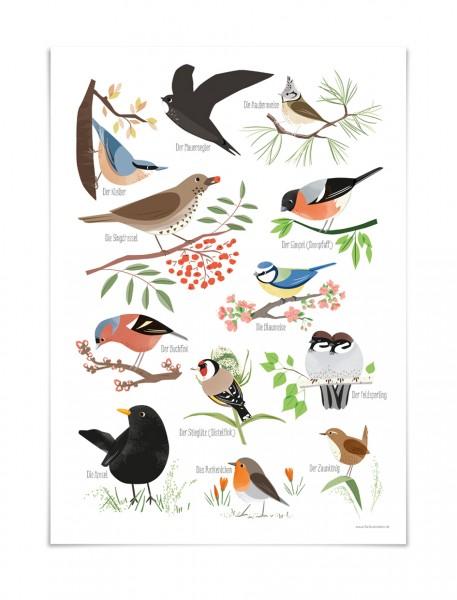 Poster heimische Gartenvögel | natürliche Kinderzimmerdeko
